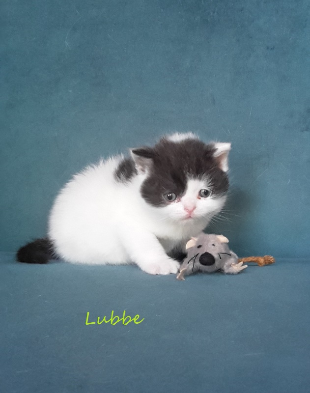 Lubbe 1